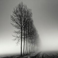 I need a guide: pierre pellegrini