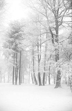 Winter Forest, Hessen, Deutschland, Germany, by Hans Vaupel, on flickr.