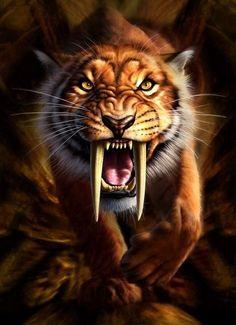 Resultado de imagem para sabre tooth tiger drawing