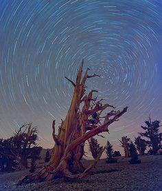 Full Star Trails Bristlecone