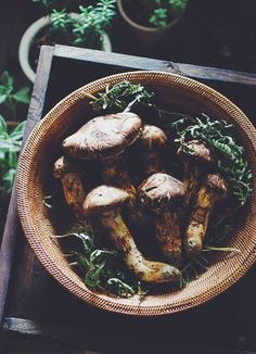 Japanese Matsutake Mushrooms - Matsutake are highly prized mushrooms in Japan for its distinct spicy-aromatic odor.
