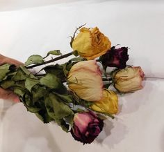 Items similar to Dried Roses, Roses, Burgundy Pink and Yellow roses on Etsy Yellow Flowers, Silk Flowers, Pink Roses, Yellow Flower Arrangements, Flower Centerpieces, Drying Roses, Vibrant Colors, Burgundy, Floral