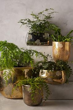 Metallic Crackle Herb Pot - anthropologie.com #anthropologie #AnthroFave