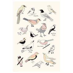 Ikea bird poster