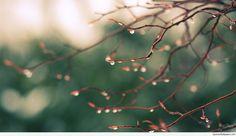Spring Rain Drops HD Desktop Background