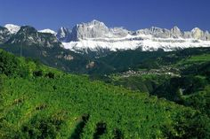 Visiting Alto Adige, Italy's Stunning White Wine Country - what to do, what to see, what to taste, and where to stay.