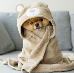 Find images and videos about dog and doggy on We Heart It - the app to get lost in what you love. Cute Baby Dogs, Baby Animals Super Cute, Super Cute Puppies, Cute Little Puppies, Cute Little Animals, Cute Dogs And Puppies, Cute Funny Animals, I Love Dogs, Doggies