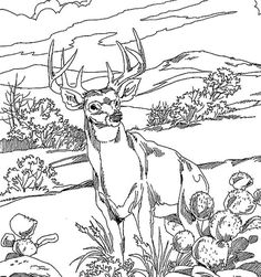 free animal coloring pages for adults  texas white tailed deer