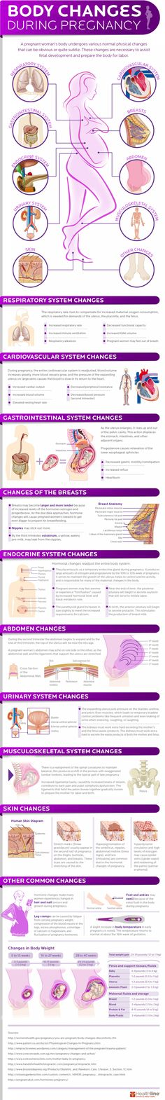 Body Changes During Pregnancy   Visual.ly