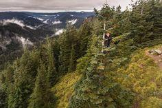 Life is much more fun when you climb trees.  #climbing #tree #drone #hiking #adventure #oregon #optoutside #love #sisters #fun