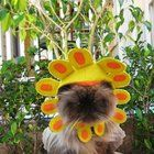 Thinking about cat costumes for Halloween so I look up cat flower costumes since my cat loves flowers. I think this changed my mind. Bolly4u