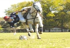 PATO: Deporte hípico de cancha de cuatro jugadores por equipo que se juega tradicionalmente entre los gauchos en Argentina