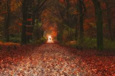 Red - by Robert Broeke October Country, Tree Leaves, Fall Leaves, Stay The Night, In The Tree, Pathways, Great Photos, Travel Photography, Beauty Photography