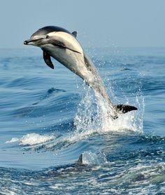 maya47000:  Dolphin hello! by Karen R. Schuenemann