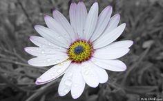 fondos de escritorio - Flores: http://wallpapic.es/naturaleza/flores/wallpaper-39105