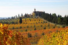 Photo Gallery - Castello Banfi