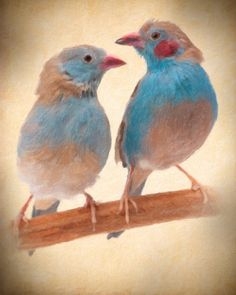 Two Adorable Finches by ClawsAnPaws on Etsy, $14.95