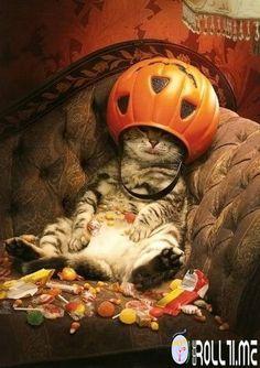 Troppi dolcetti e pochi scherzetti per questo gattino! #FunnyRoll #RollTime #HalloweenRoll
