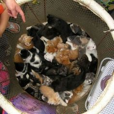 Kittens - Crazy cat lady starter kit