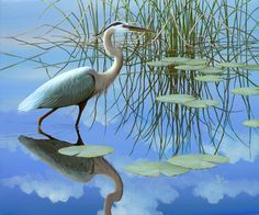 Ben W. Essenburg, Florida Wildlife Artist
