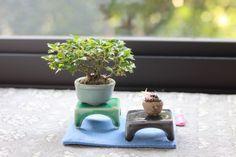 「盆栽・水石・山草フェア」の画像|超ミニ盆栽のブログ |Ameba (アメーバ)
