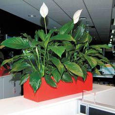 Troughs - Eco Green Office Plants Roof Plants, Inside Garden, Green Office, Eco Green, Office Plants, Balcony Garden, Plant Leaves, Planters, Roof Terraces