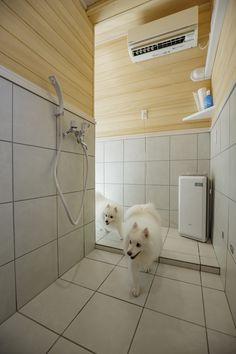 Pet Cafe, Dog Salon, Dog Rooms, Home Appliances, Pets, House Appliances, Appliances, Animals And Pets