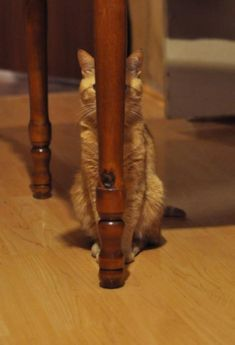 you cannot see me, I'm hiding