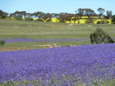 enroute to clare valley