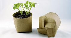Seed starting in toilet paper rolls! I knew there was a good reason I save toilet paper rolls! Container Gardening, Gardening Tips, Organic Gardening, Organic Farming, Vegetable Gardening, Gardening Quotes, Vegetable Planters, Hydroponic Gardening, Plantation