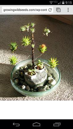 Air Plant Terrarium, Garden Terrarium, Succulents Garden, Garden Plants, Indoor Plants, Planting Flowers, Air Plants Care, Plant Care, Air Plant Display