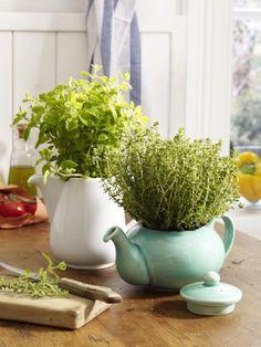 Diese ausrangierte Teekannen werden ganz einfach zu Kräutertöpfe für Basilikum und Oregano umfunktioniert.