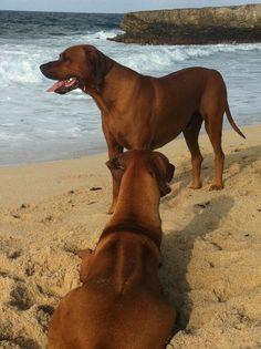 beach...aruba!!!