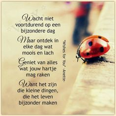 List of attractive verjaardagswensen ideas and photos Words Quotes, Me Quotes, Qoutes, Sayings, Love Words, Beautiful Words, Positive Vibes, Positive Quotes, Dutch Quotes