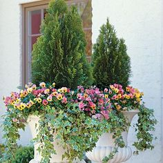 Dramatic Pansy Container | Follow our rule of thriller, filler, spiller for a container that's guaranteed to impress. | SouthernLiving.com
