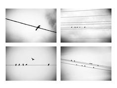 black and white photography birds set 8x10 8x12 by mylittlepixels