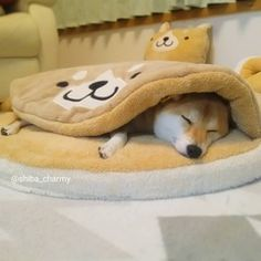 Cutest Bear Blanket Tuck In Warm Indoor Pet Bed For Small Medium Large Dogs Your fluffy one at home will thank you for this one. Free worldwide shipping & limited time for tax free! Shiba Inu, Animals And Pets, Baby Animals, Tattoo L, Bear Blanket, Indoor Pets, Cute Dog Pictures, Love Dogs, Cute Bears