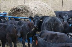Farmers react to more emergency funds