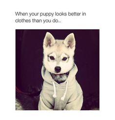 Super Sweet husky puppy ! / Sweater