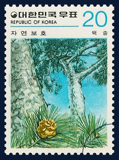 Postage Stamps of Nature Conservation Series,  Pinus bungeana ZUCC, Plants, Sky blue, Green, Teal, 1979 02 20, 자연보호 시리즈(제1집), 1979년 2월 20일, 1121, 백송, postage 우표