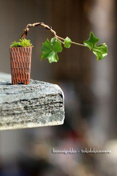 ミニ盆栽 Mini Bonsai, Indoor Bonsai, Bonsai Plants, Bonsai Garden, Cactus Plants, Indoor Plants, Ikebana, Bonsai Styles, Moss Garden