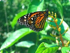 inbioparque costa rica mariposas