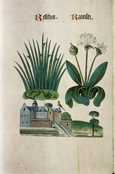 "Rushes and Wild Garlic, Moated building, tower, bridge over moat, in ""The Tudor Pattern book"", ca. 1520/30, Ms Ashmole 1504"