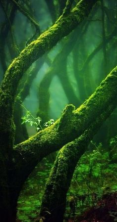Majestic old trees cover in magical mysterious emerald moss