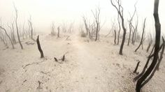 The Dead Forest (Hutan Mati) Mt.Papandayan ones of the most  places you ...