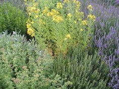 Autor: MirkaG Herb Garden, Herbs, Plants, Author, Herbs Garden, Herb, Plant, Planets, Medicinal Plants