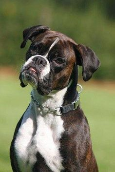 Most current Free of Charge boxer dogs and puppies Style Complete you care about your canine? Naturally, people do. Appropriate doggy attention along with coaching wi Boxer Breed, Boxer Puppies, Dogs And Puppies, Doggies, Free Puppies, Boxer And Baby, Boxer Love, I Love Dogs, Cute Dogs