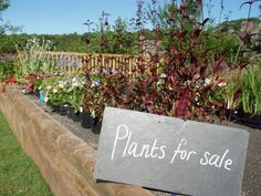 One of the many things we have to offer from our garden in the Kitchen Garden Café.  www.askhamhall.co.uk