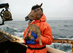 Fish Working Bering Sea by Corey Arnold