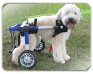 Handicappedpets.com, makes Walkin' Wheels for dogs who have mobility issues. They're in it for love, not $$!